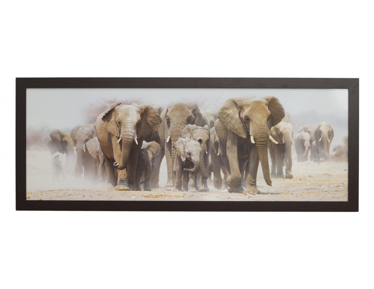 Obraz slonie afrykanskie